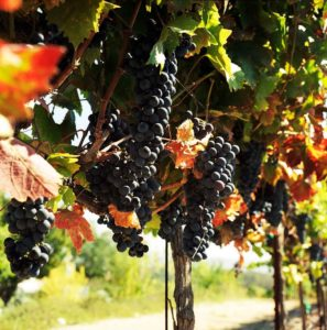 Cayuga Wine Trail is presenting the Wine and Herb Festival 3