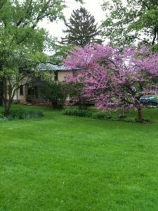 Spring colors at a Finger Lakes Bed and Breakfast 17