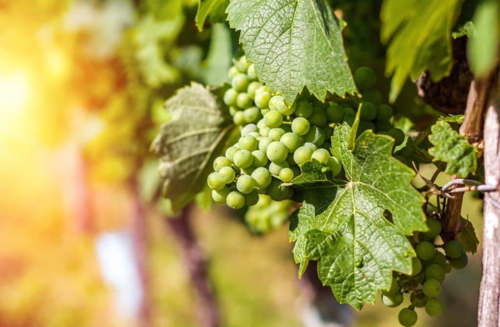 2020 Finger Lakes Wine Festival